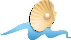 DTR-program-shell-opal