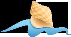 DTR-program-shell